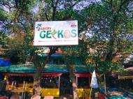 Hungry Geckos, Гостевой дом